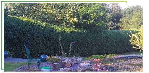 hedge-trimming-solihull-west-midlands