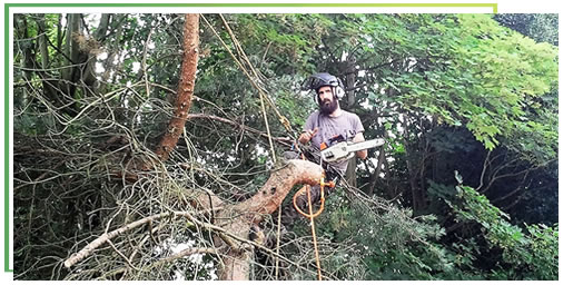tree-surgery-solihull-west-midlands