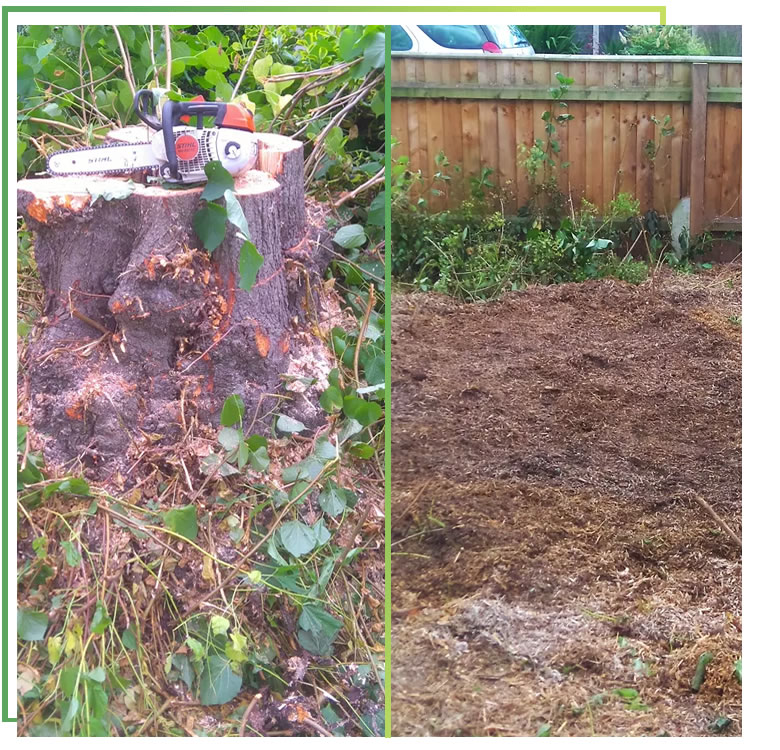 tree-stump-removal-coventry