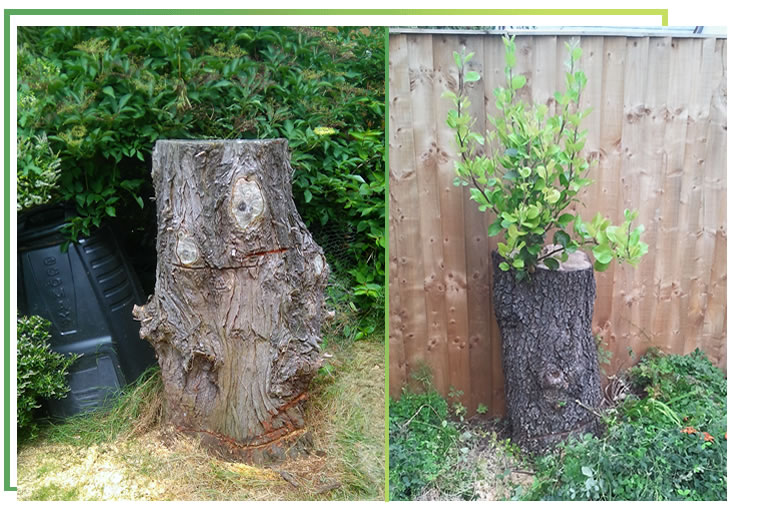 why-should-i-remove-a-stump