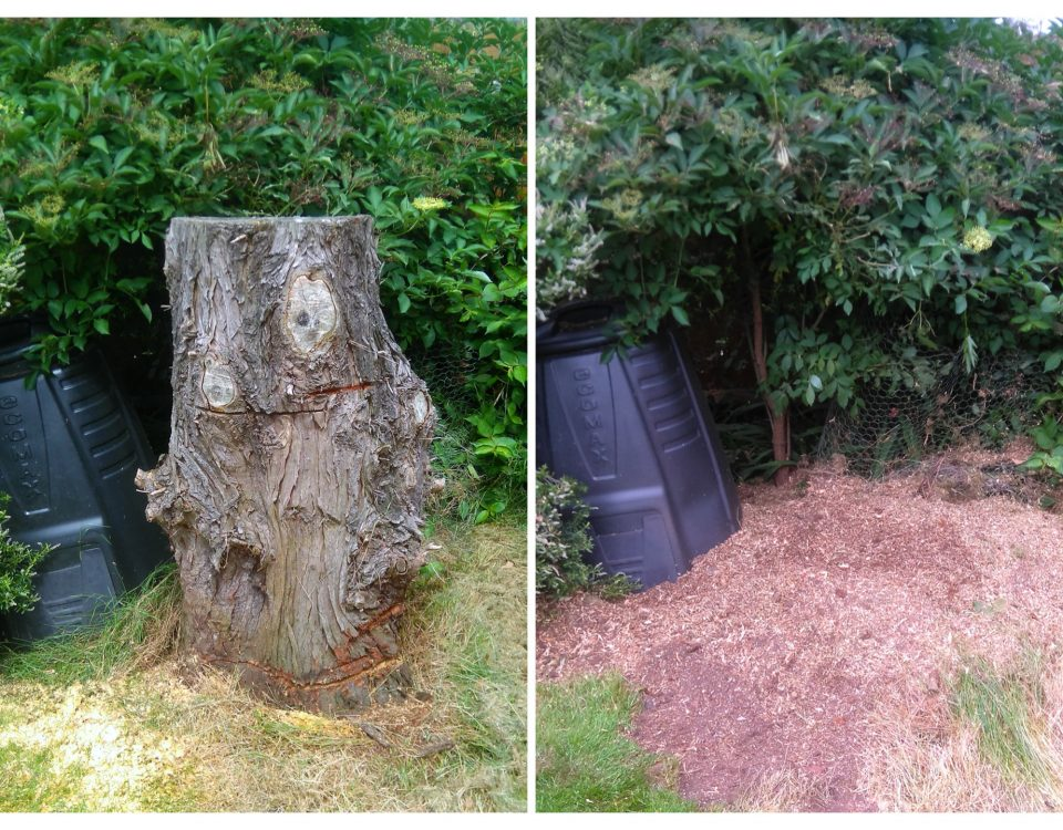 big-stump-removal