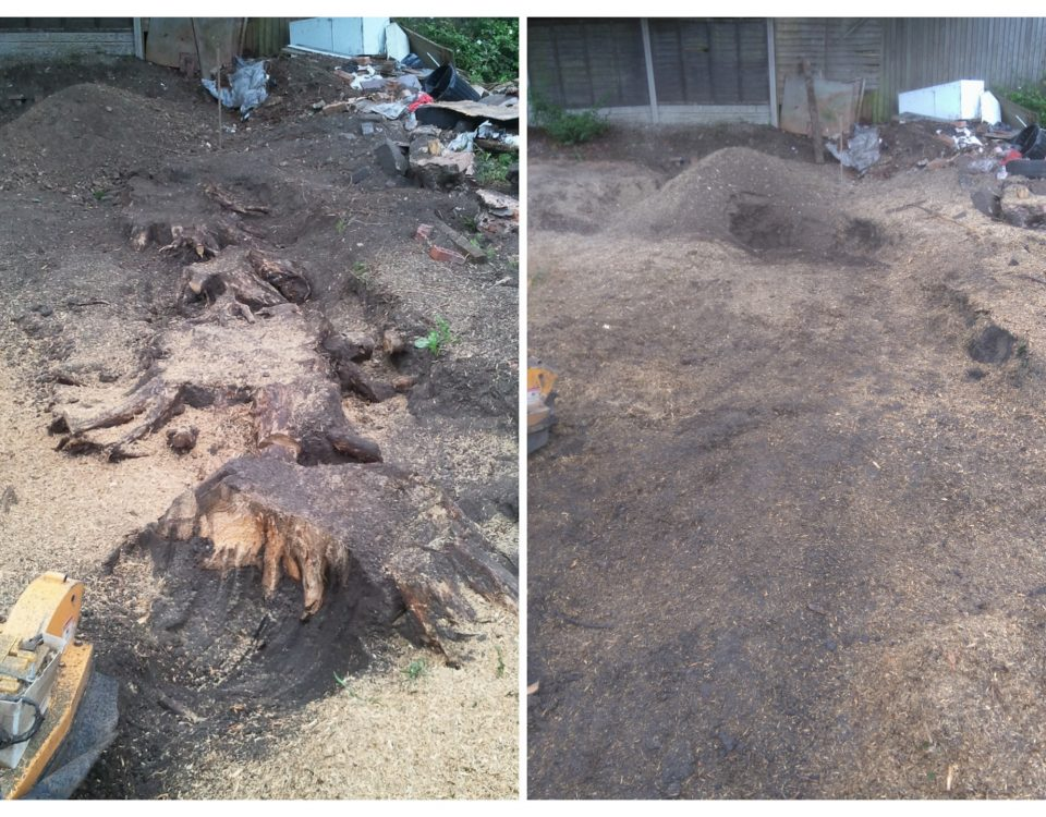 Conifer Stump Removal Birmingham